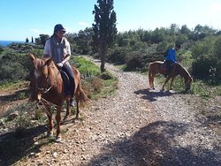 great trip with Greg and his horses..Beautiful animals that have received a second chance in lif