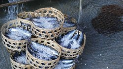 Fish Market Kusamba  ( Klungkung )