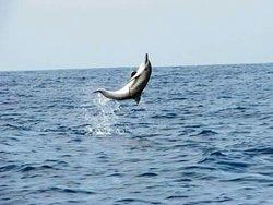 Lovina Bali Dolphin Tours
