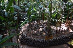 New Ranweli Spice Garden