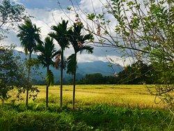 Inmitten der Natur mit Blick in die Reisfelder