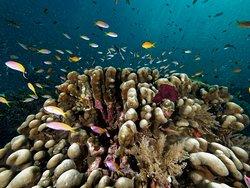 Dive Time Zanzibar