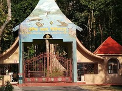 Chidiya Tapu