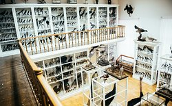 E. Eversman's Zoological Museum