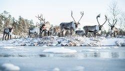 Inari Reindeerfarm