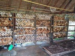 Daeng Mushroom Farm