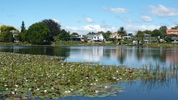 Hamilton Lake Domain