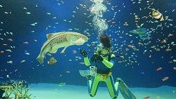 Mariho Aquarium