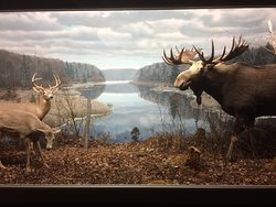 Nova Scotia Museum of Natural History