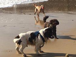 Doggy heaven!