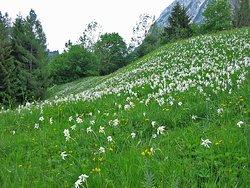 Tauplitzalm Alpenstrasse