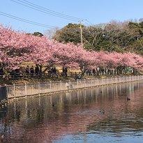 小松ヶ池公園