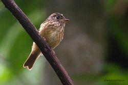 Maenam Wildlife Sanctuary