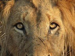Sentashya Safaris