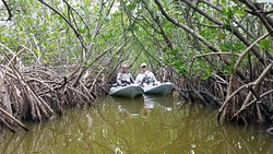 Deep in the Mangroves