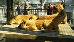 Kiryugaoka Amusement Park