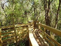 Percurso Salgueiral of Galicia Reserve