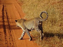 KT & Safaris