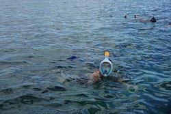 Plusieurs sorties Snorkeling (palmes, masque tuba fournis)