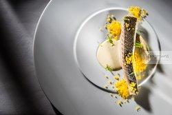 Sea bass / fennel puree / Hollandaise sauce with wasabi / dehydrated yolk