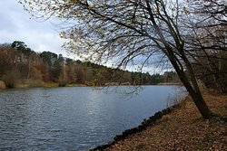 Naturschutzgebiet Vogelwoog-Schmalzwoog