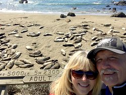 Definitely visit the elephant seals on route 1, only a few miles from the hotel.
