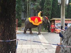ELEPHANT RIDES IN THE VILLAGE