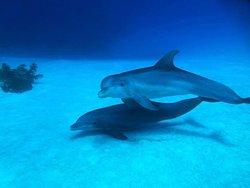 Seafari Bahamas
