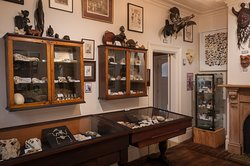 The Dunedin Museum of Natural Mystery