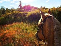 Langley 204 Horseback Riding