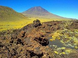 Reserva Provincial La Payunia