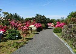 Kurume Tsubaki Park
