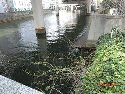 鎧橋から日本橋川