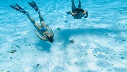 girls just wanna have fun! swimming beeten more than 1000 starfish! its real!