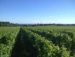 Hidden Bench Vineyards & Winery