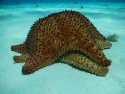 couple starfish!
