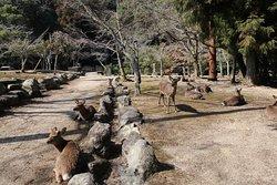 Omoto Park