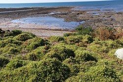 Lillico Beach Conservation Area