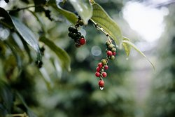 Bo Tree Organic Farm & Pepper Plantation
