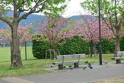 Okazaki Park