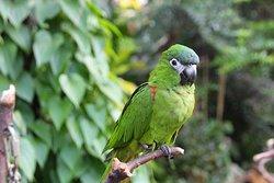 布鲁代尔花鸟保护园