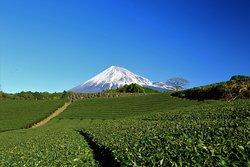 Imamiya Tea Plantation