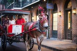 Turer med häst och vagn