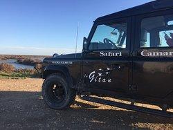 Safari Le Gitan