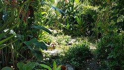 Barney's Flower & Hummingbird Garden Jamaica