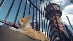 MURARIUM Art-Collection of Cats