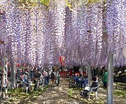 Nakayama Oto Festival