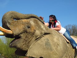 Elefantenhof Platschow