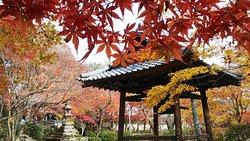 Shojiji Temple