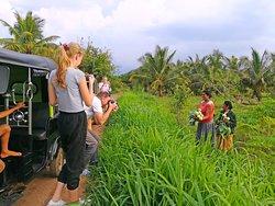Walking Through Vegetable Farm - Village Tour Sri Lanka